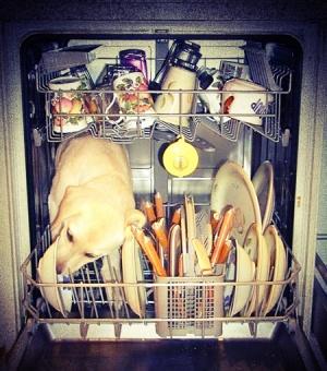 Entretenir d panner et r parer son lave vaisselle app - Comment brancher lave vaisselle ...